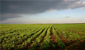 Мораторий на продажу земли